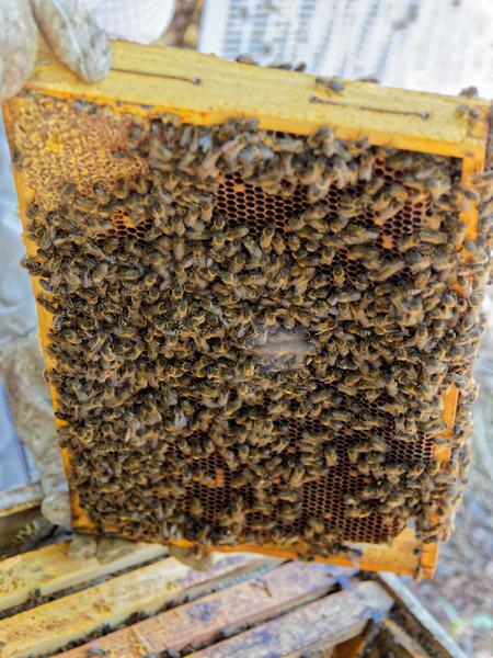 Inspecting-beehives-80.jpeg