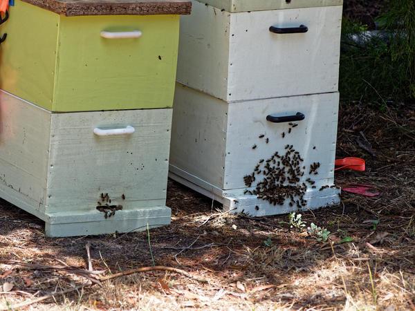 Inspecting-beehives-81.jpeg