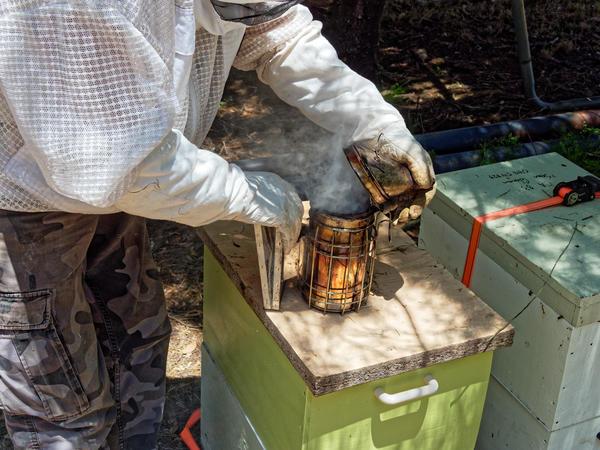 Inspecting-beehives-9.jpeg