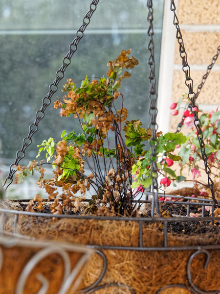 Hanging-baskets-2.jpeg