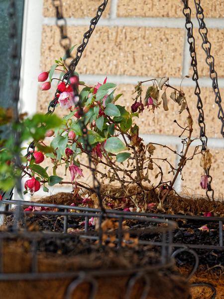 Hanging-baskets-3.jpeg