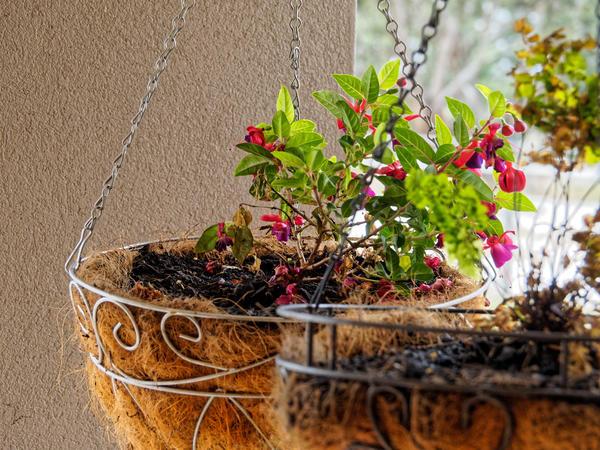 Hanging-baskets-4.jpeg