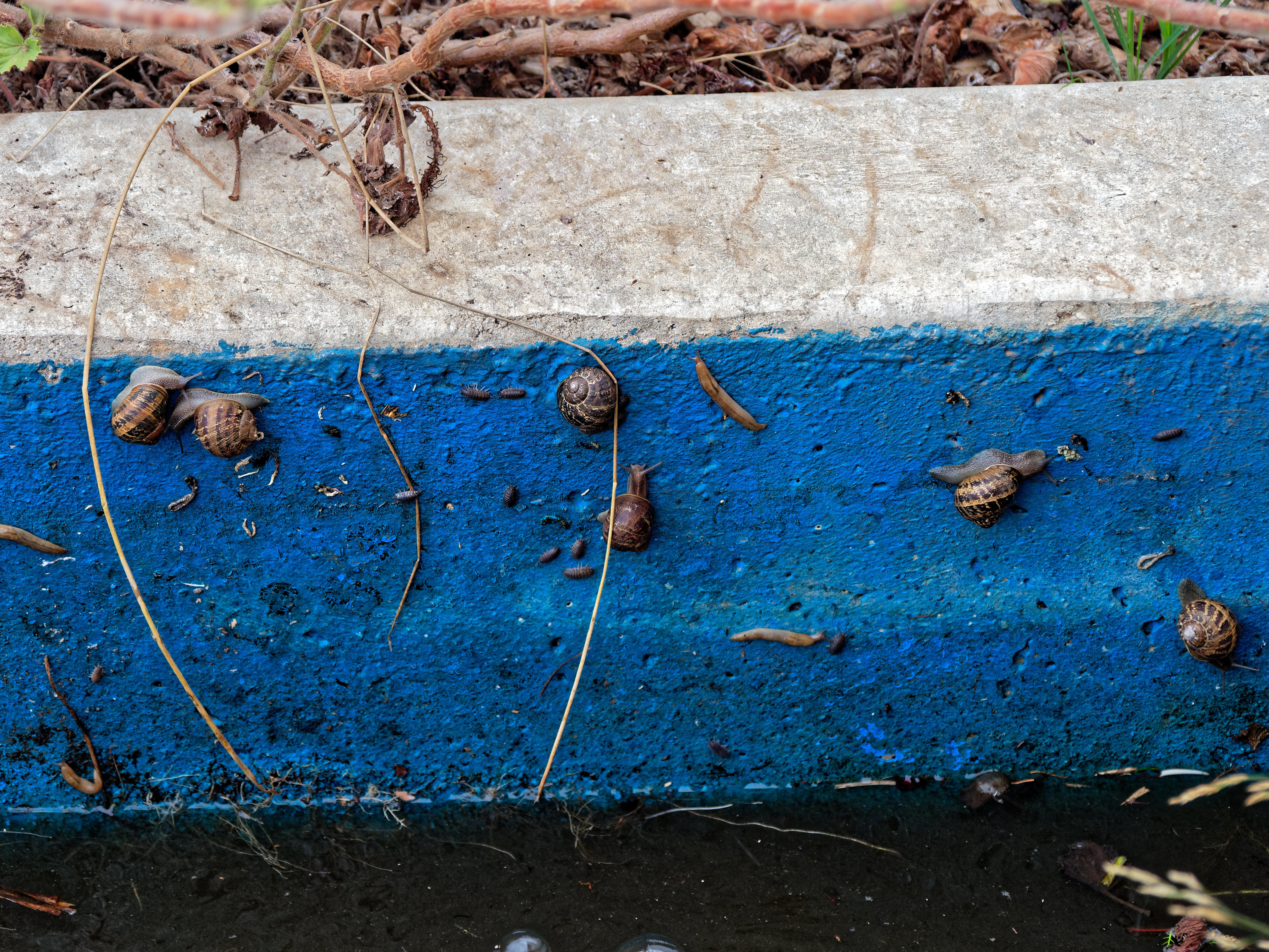 This should be Snails-1.jpeg.  Is it missing?
