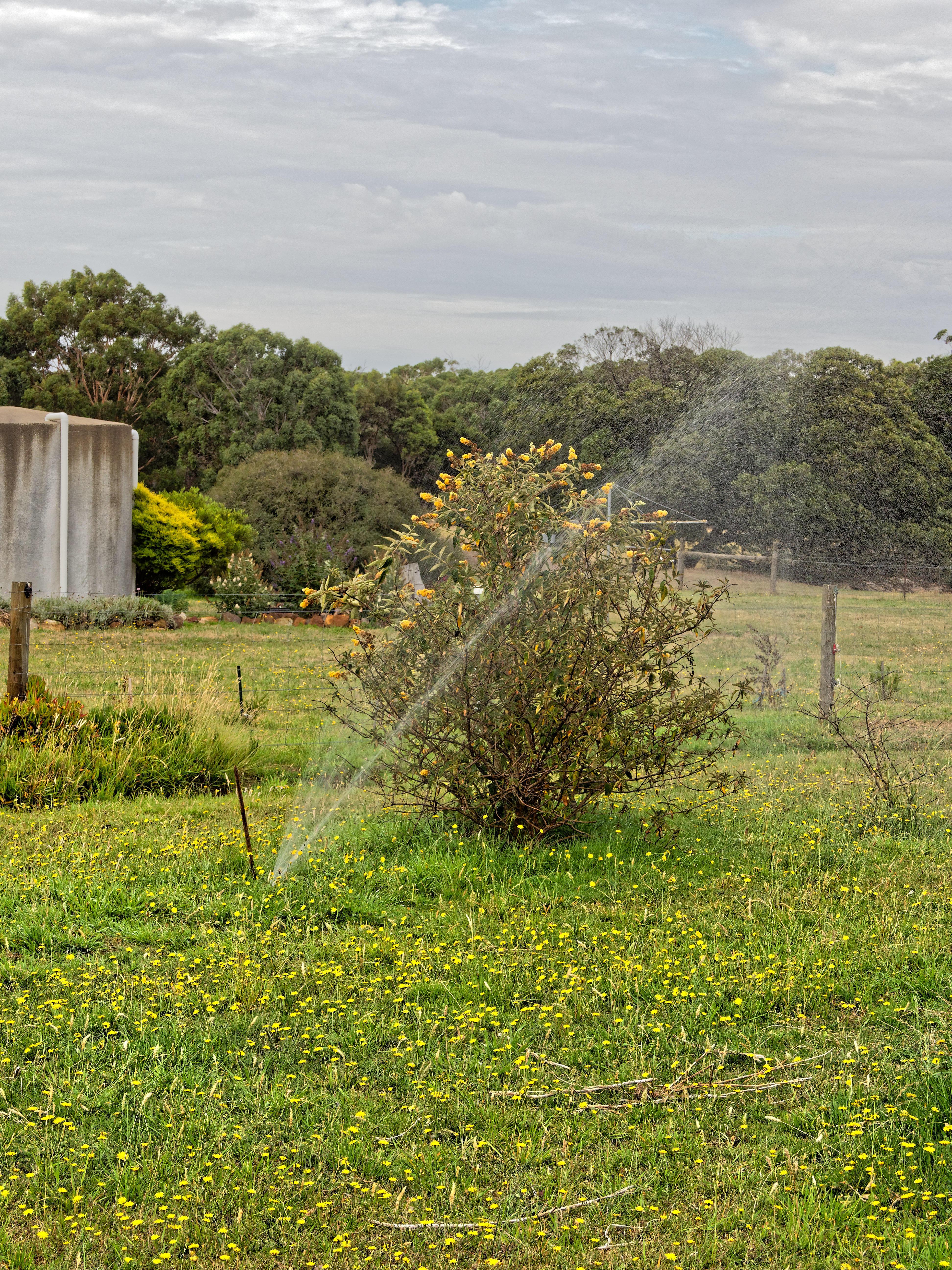 Sprinkler-system-3.jpeg