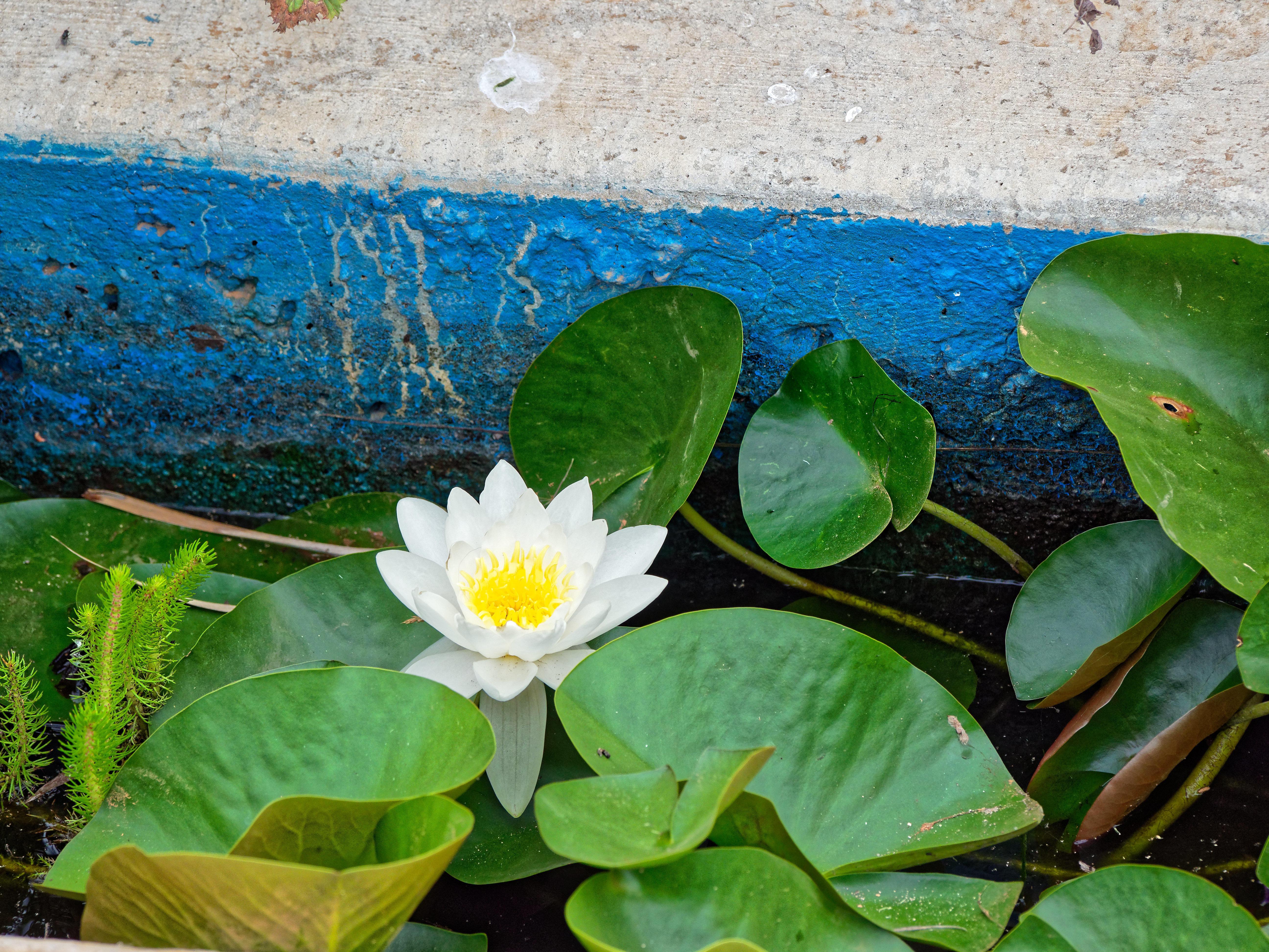 Water-plants-9.jpeg