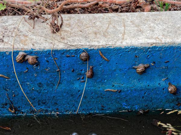 Snails-1.jpeg