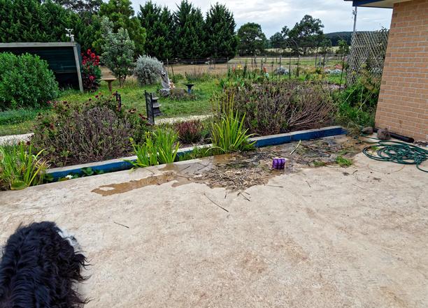 Water-plants-5.jpeg