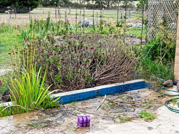 Water-plants-6.jpeg