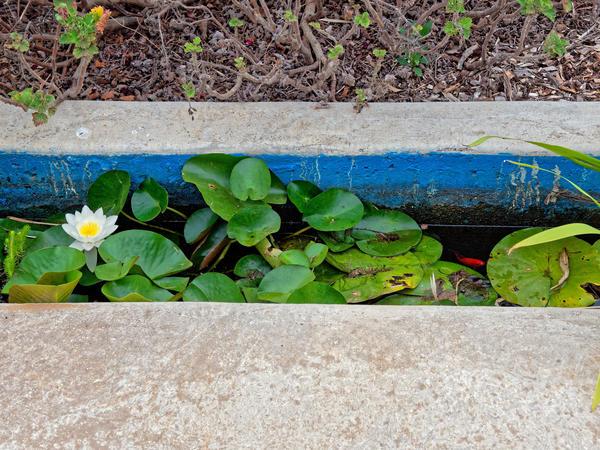 Water-plants-7.jpeg