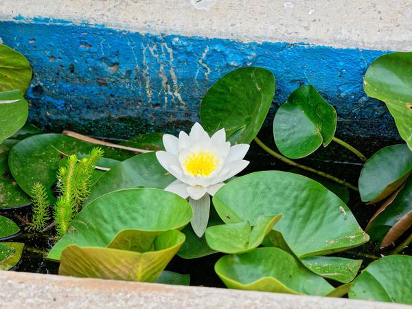 Water-plants-8.jpeg