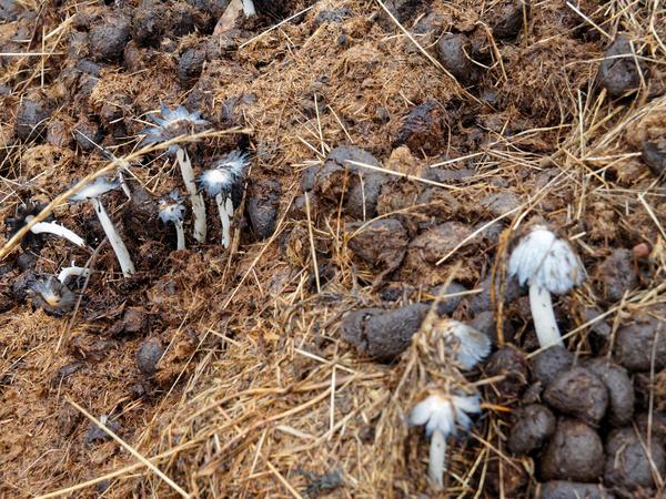 Mushrooms-5.jpeg