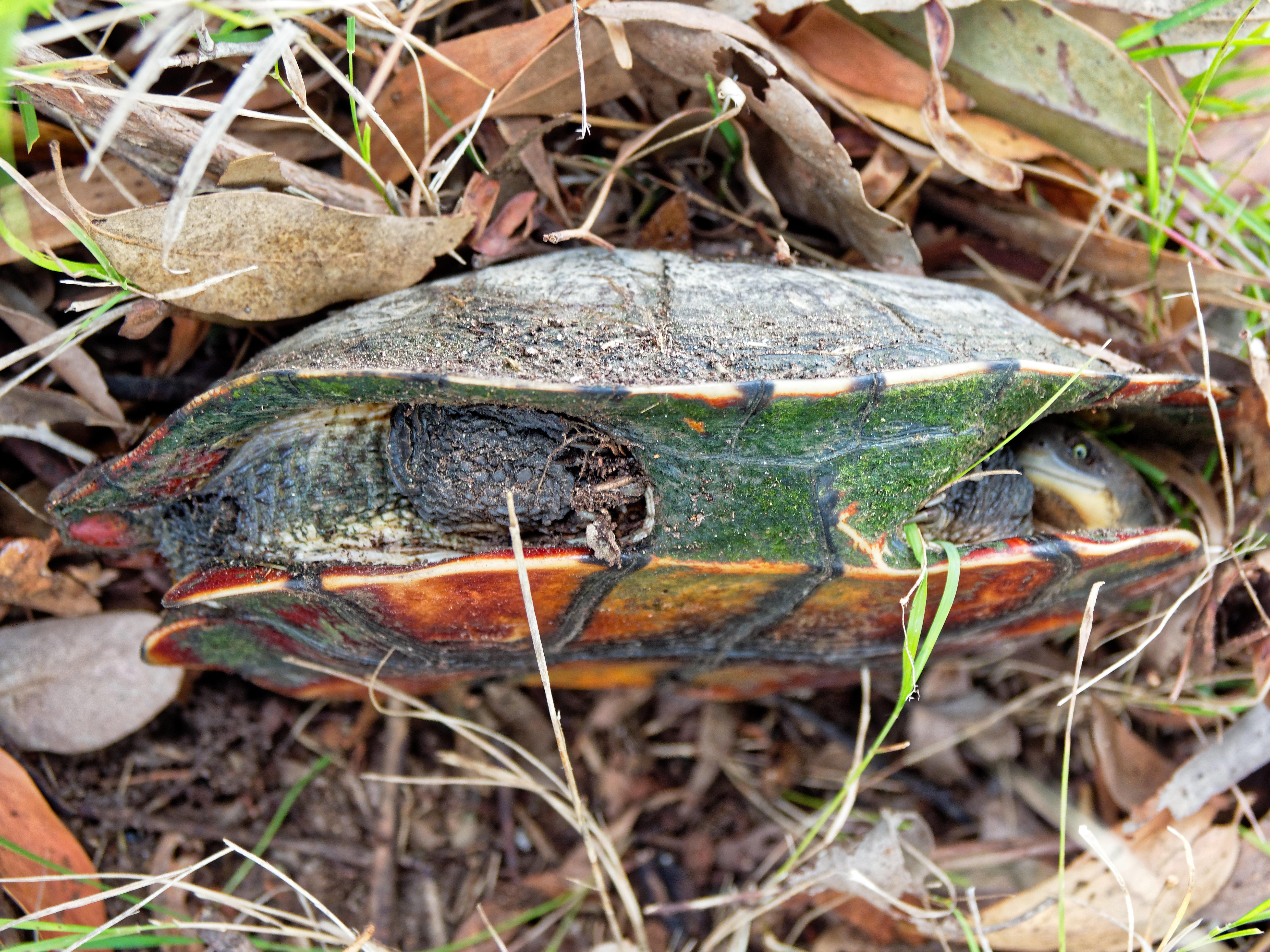 Tortoise-1.jpeg