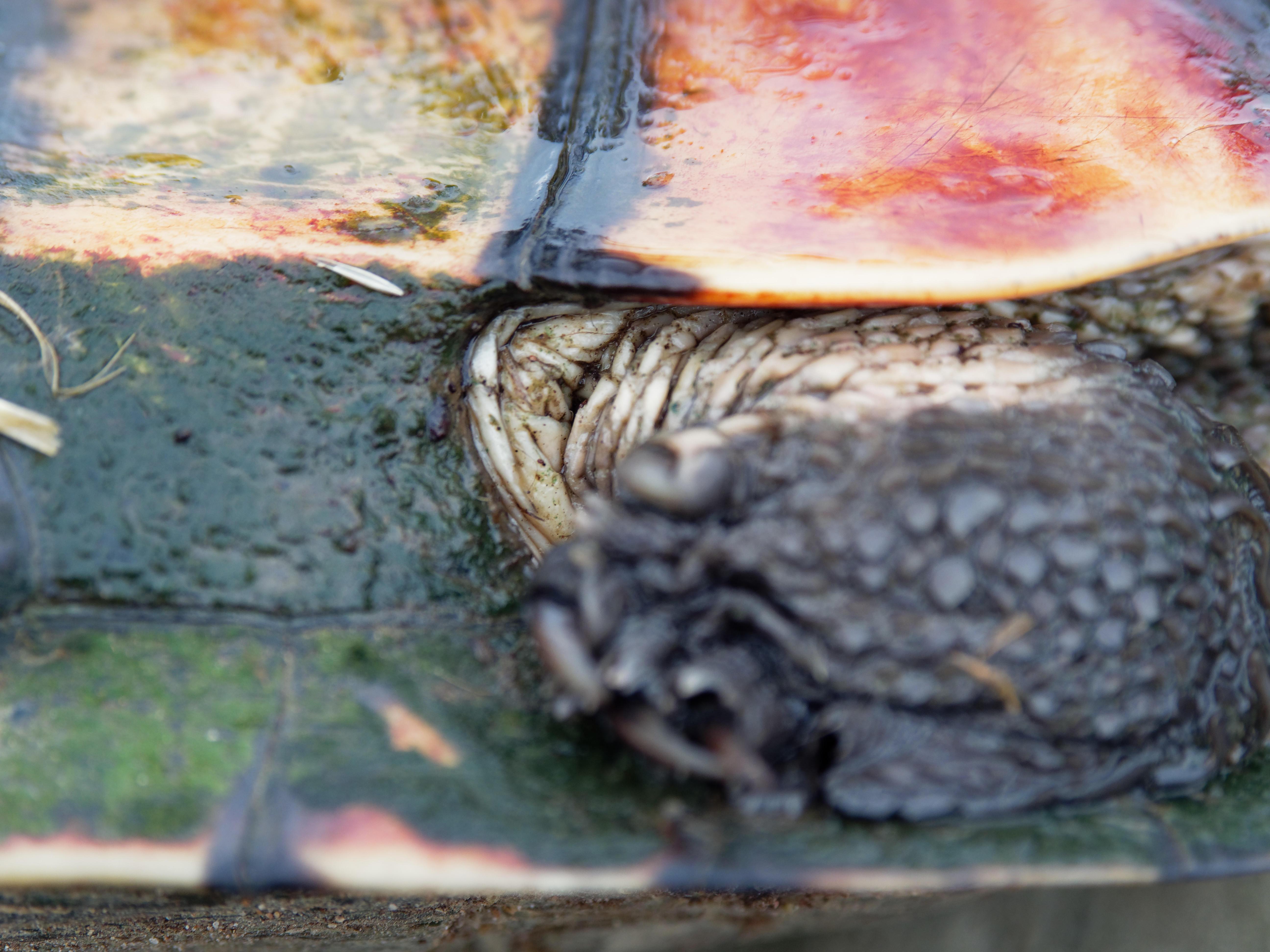 Tortoise-13.jpeg