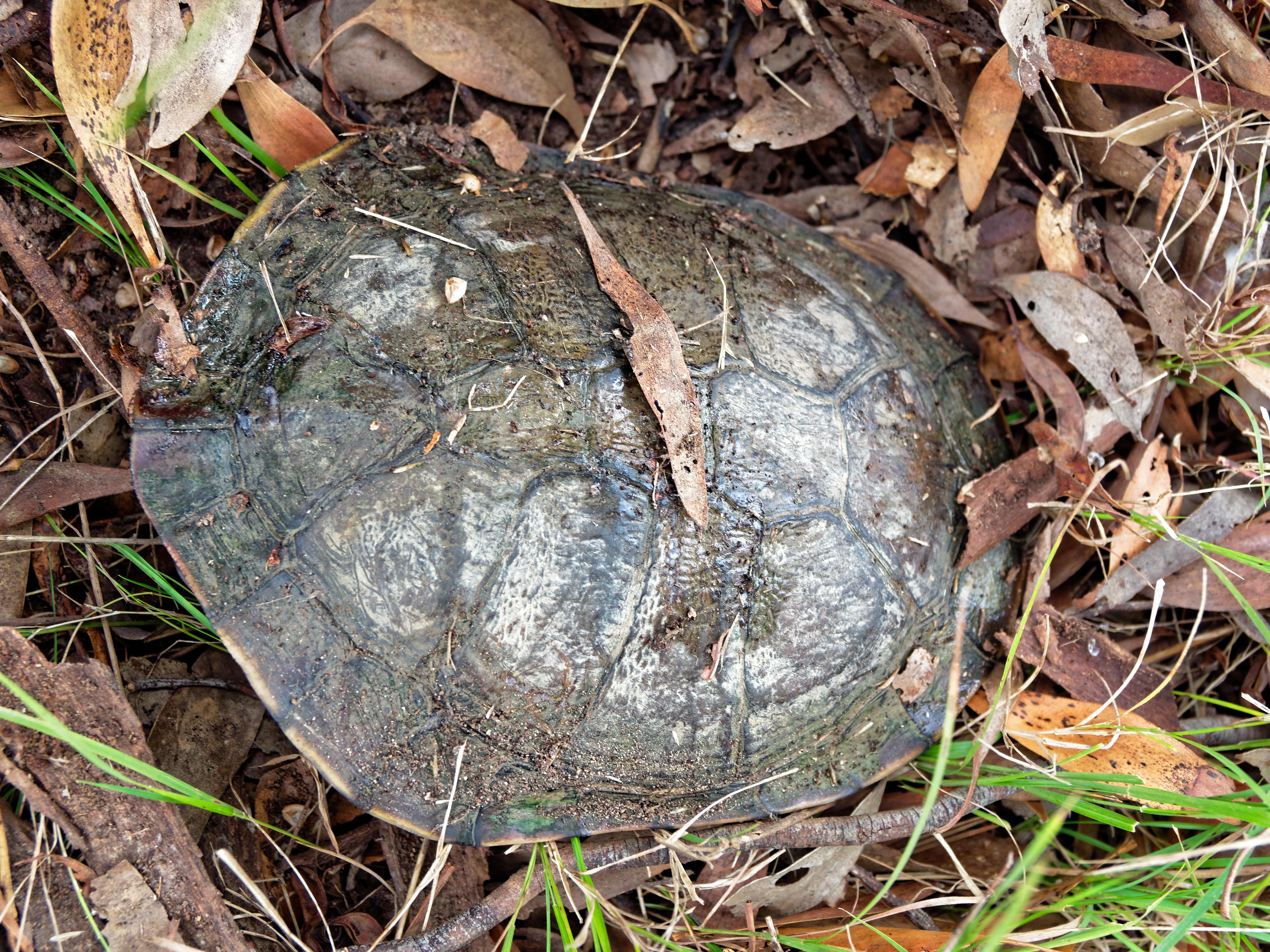 Tortoise-2.jpeg
