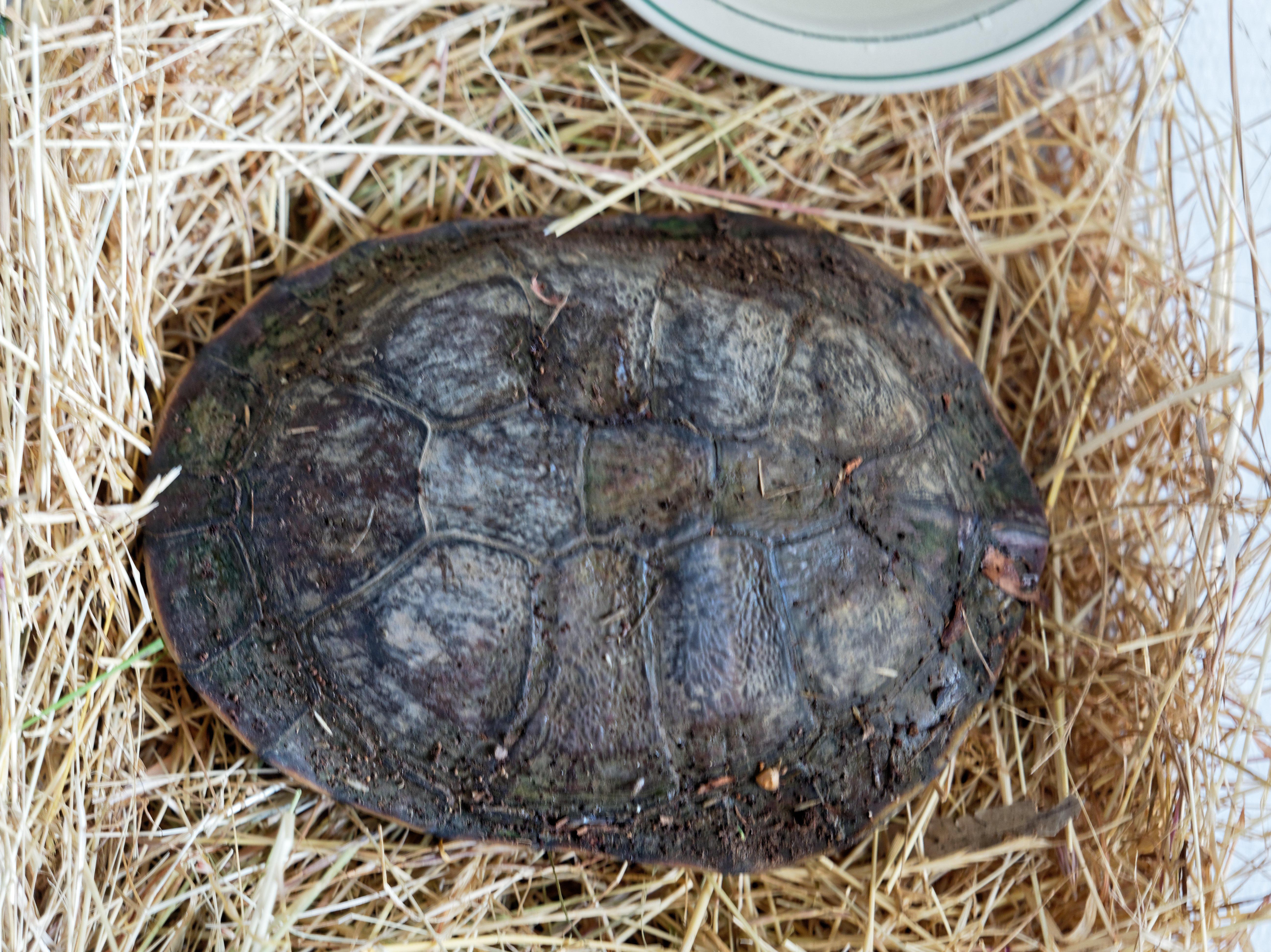 Tortoise-4.jpeg