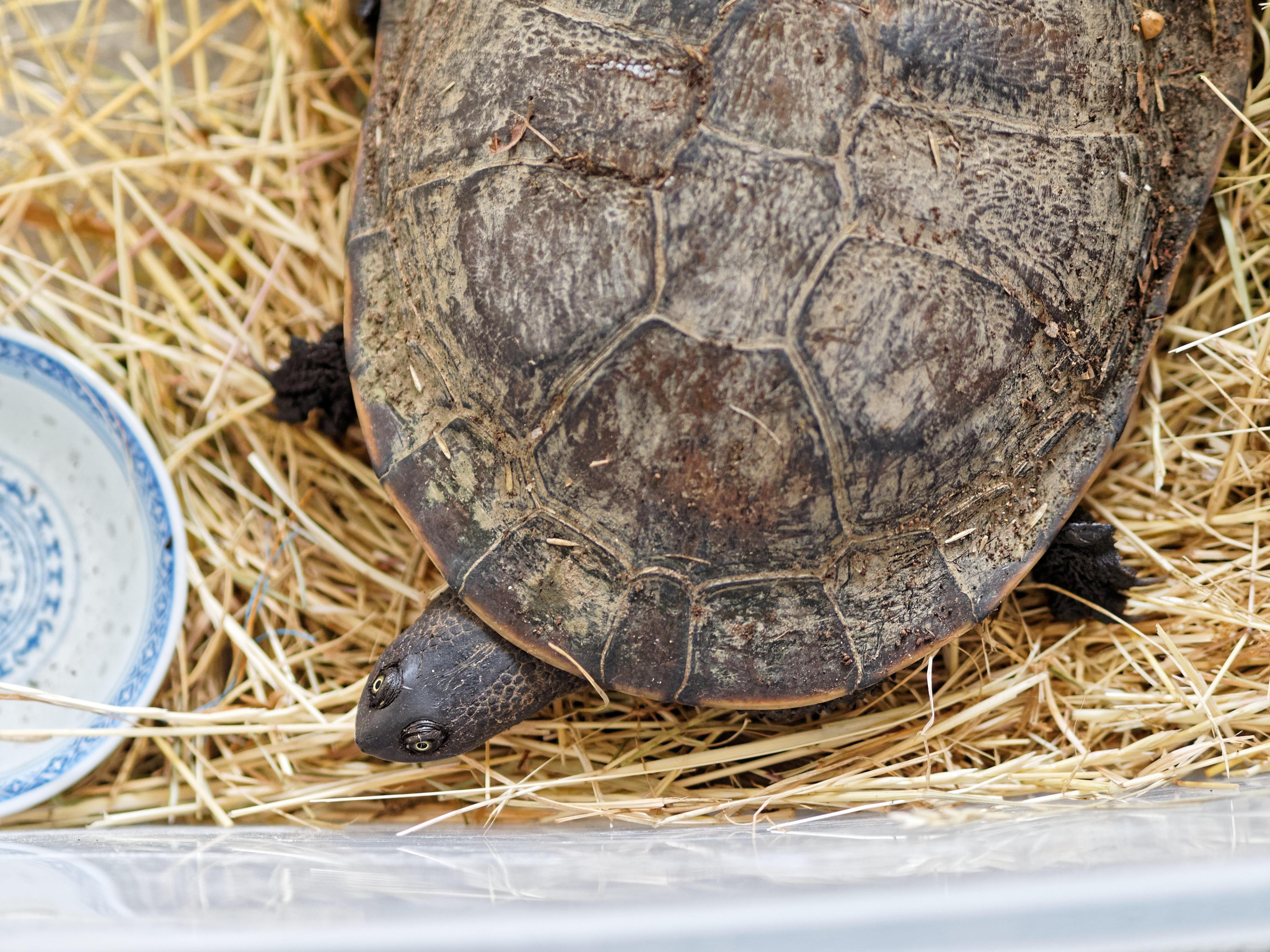 Tortoise-7.jpeg