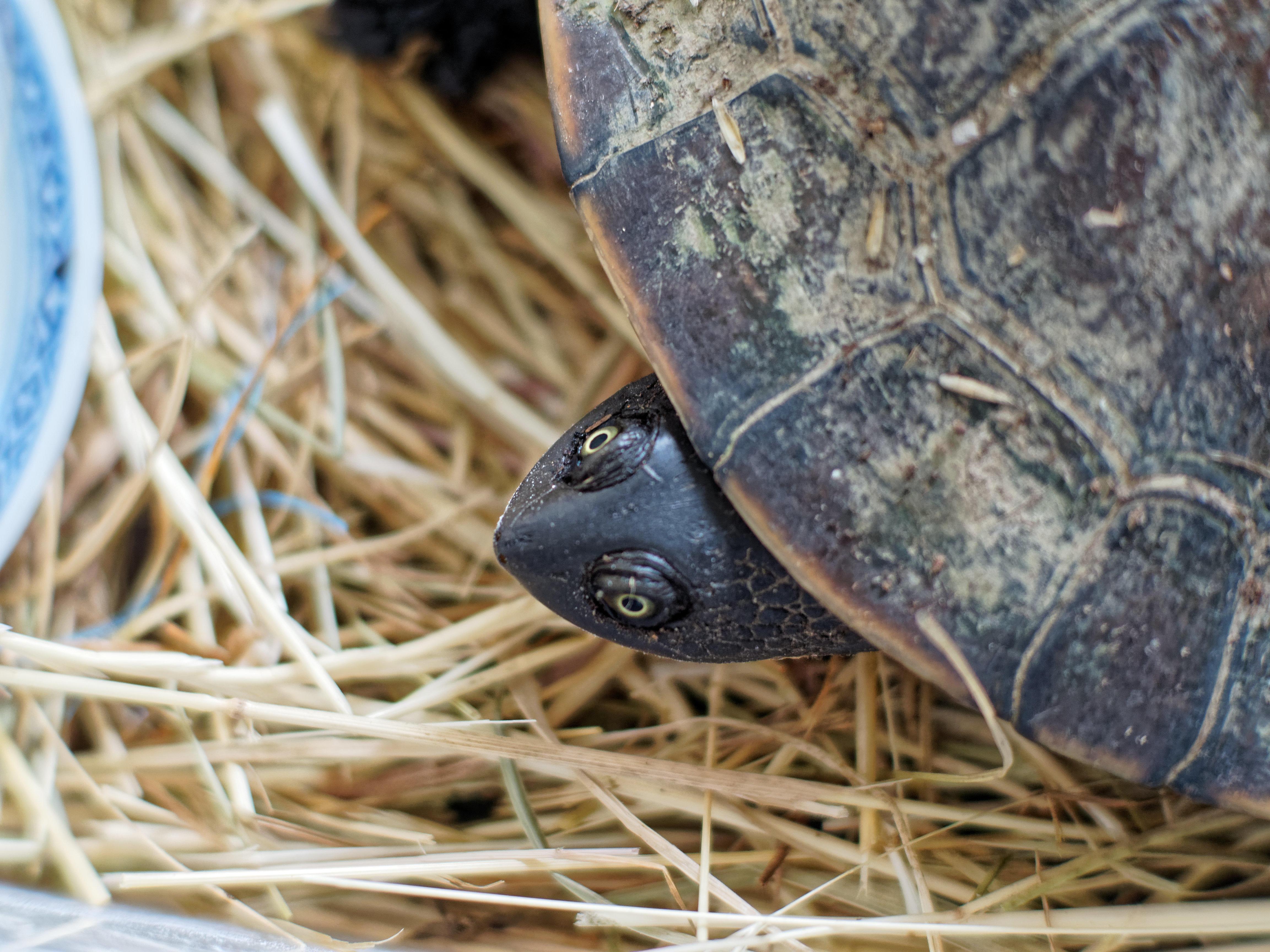 Tortoise-9.jpeg