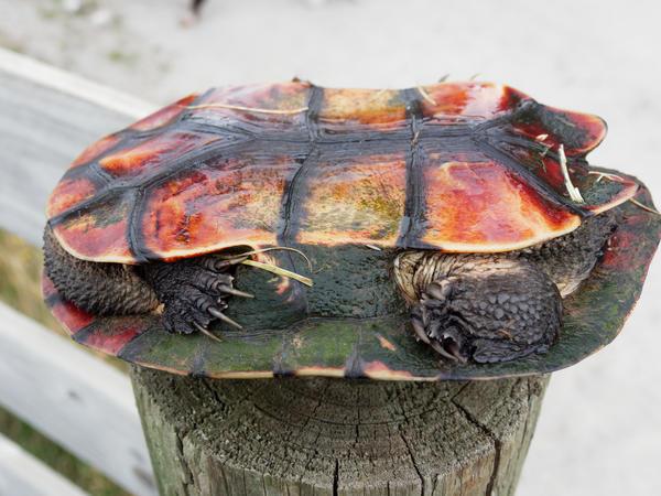 Tortoise-12.jpeg