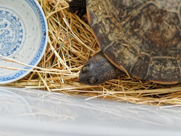 Tortoise-6.jpeg