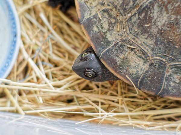 Tortoise-8.jpeg