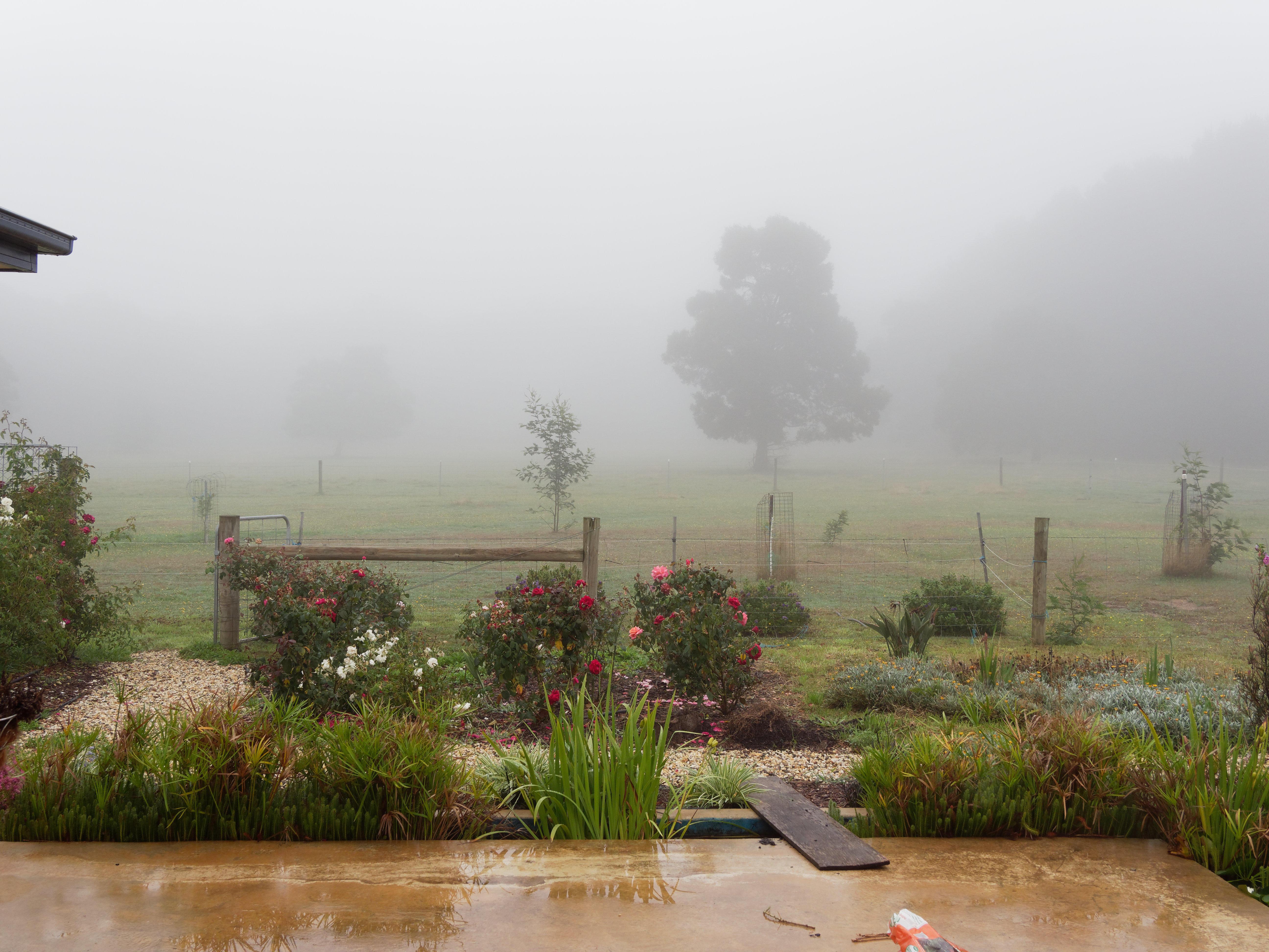Fog.jpeg