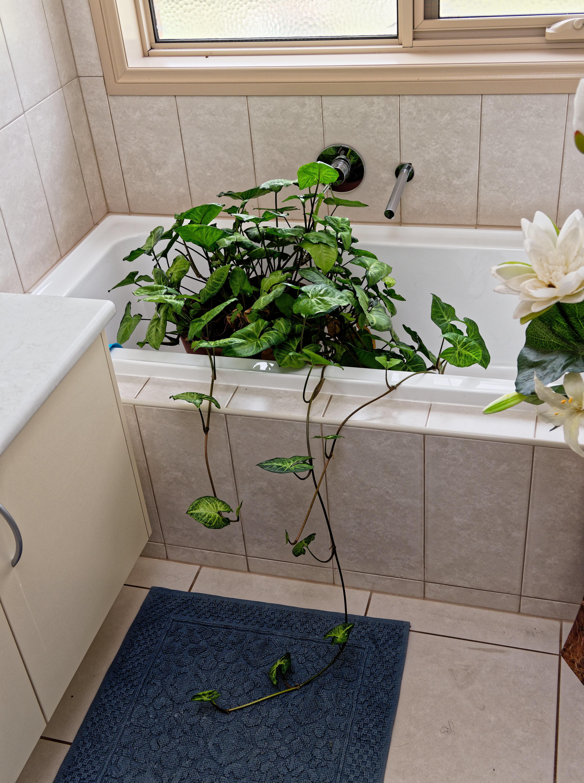 Bath-plant.jpeg