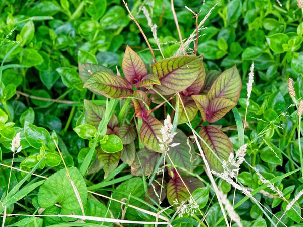 Fuchsia-5.jpeg
