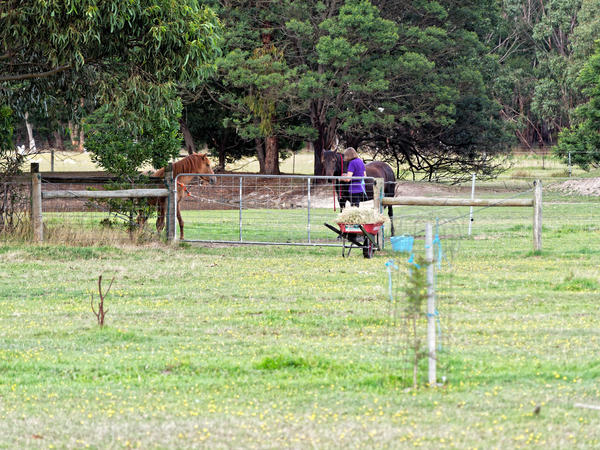 Yvonne-and-horses.jpeg