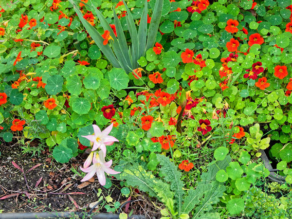 Lilies-2.jpeg