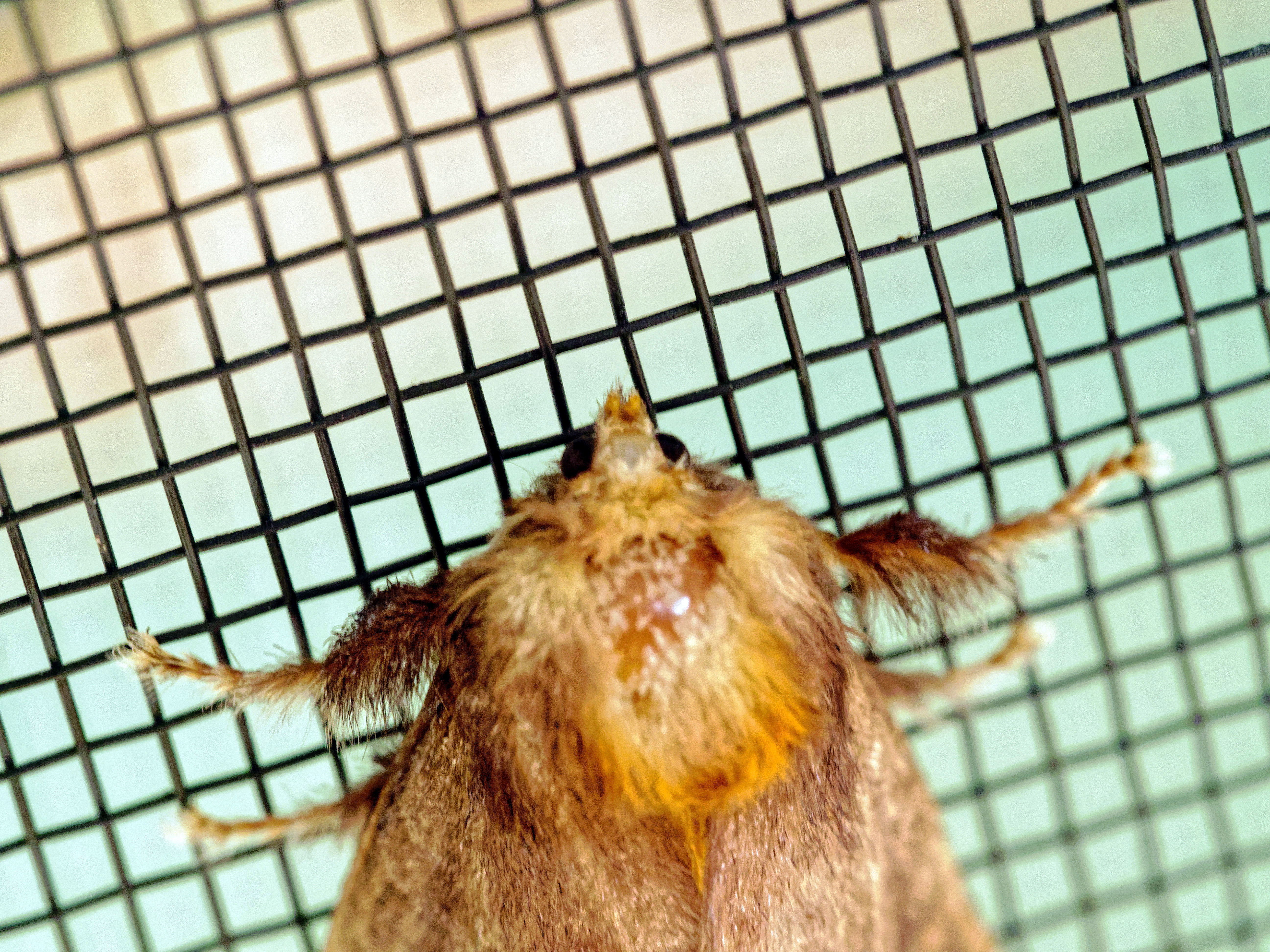Moth-8.jpeg