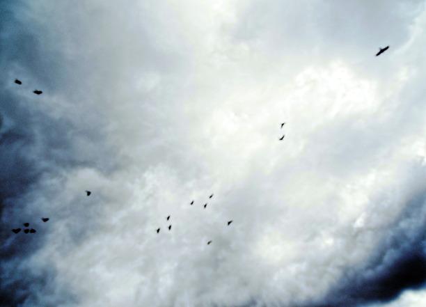 Black-cockatoos-1.jpeg