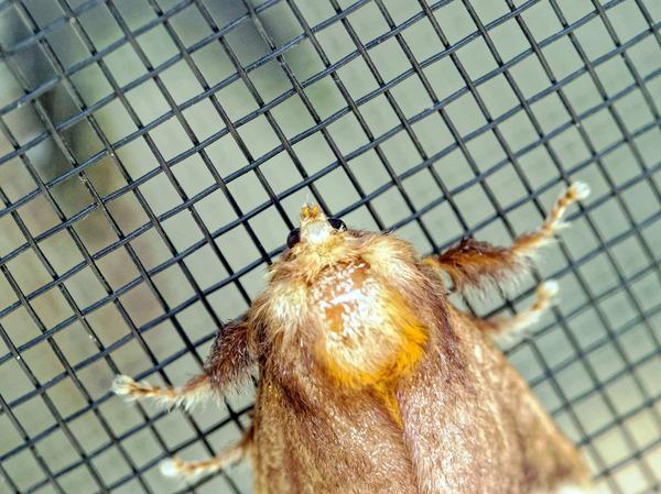 Moth-6.jpeg