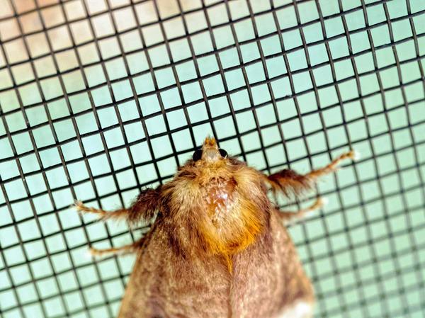 Moth-7.jpeg