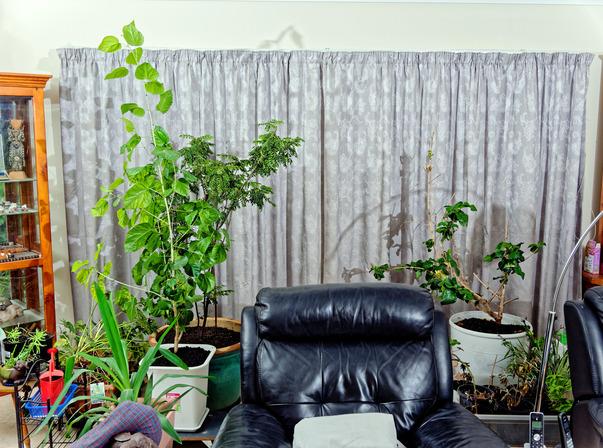 Hibiscus-rosa-sinensis-2.jpeg