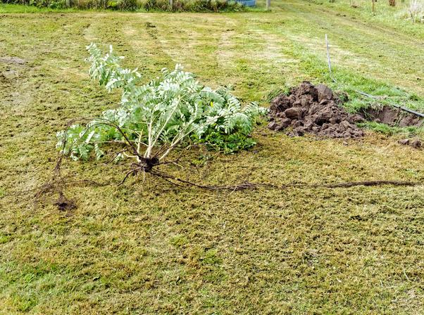 Mystery-shrub-1.jpeg