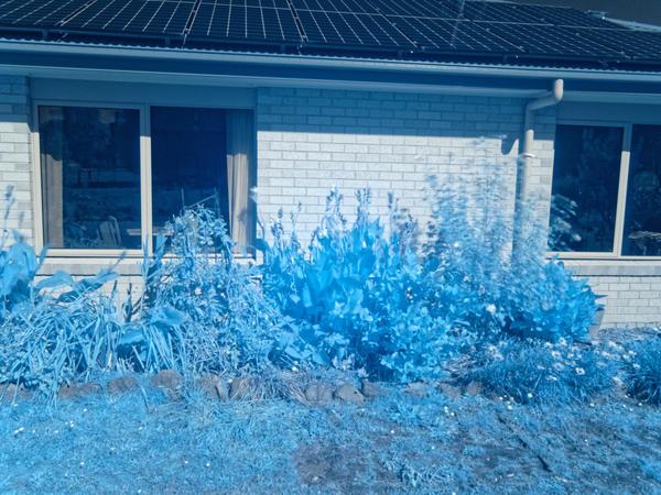 Infrared-garden-5.jpeg