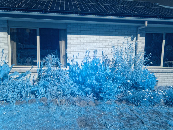 Infrared-garden-6.jpeg