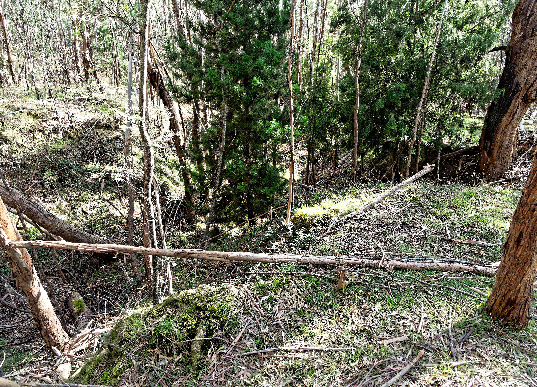 Grassy-gully-5.jpeg