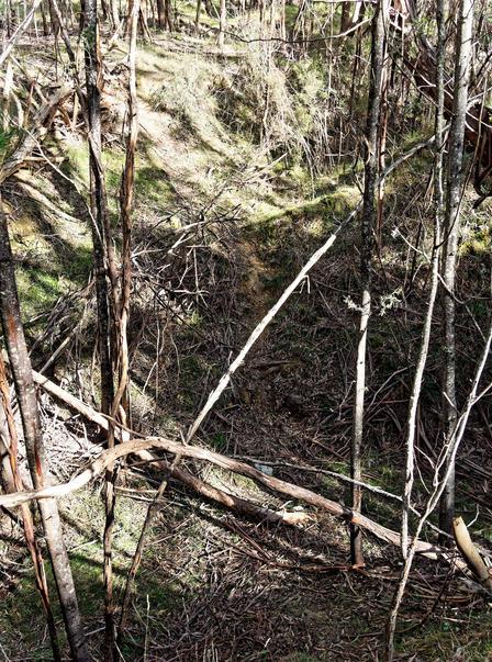 Grassy-gully-4.jpeg