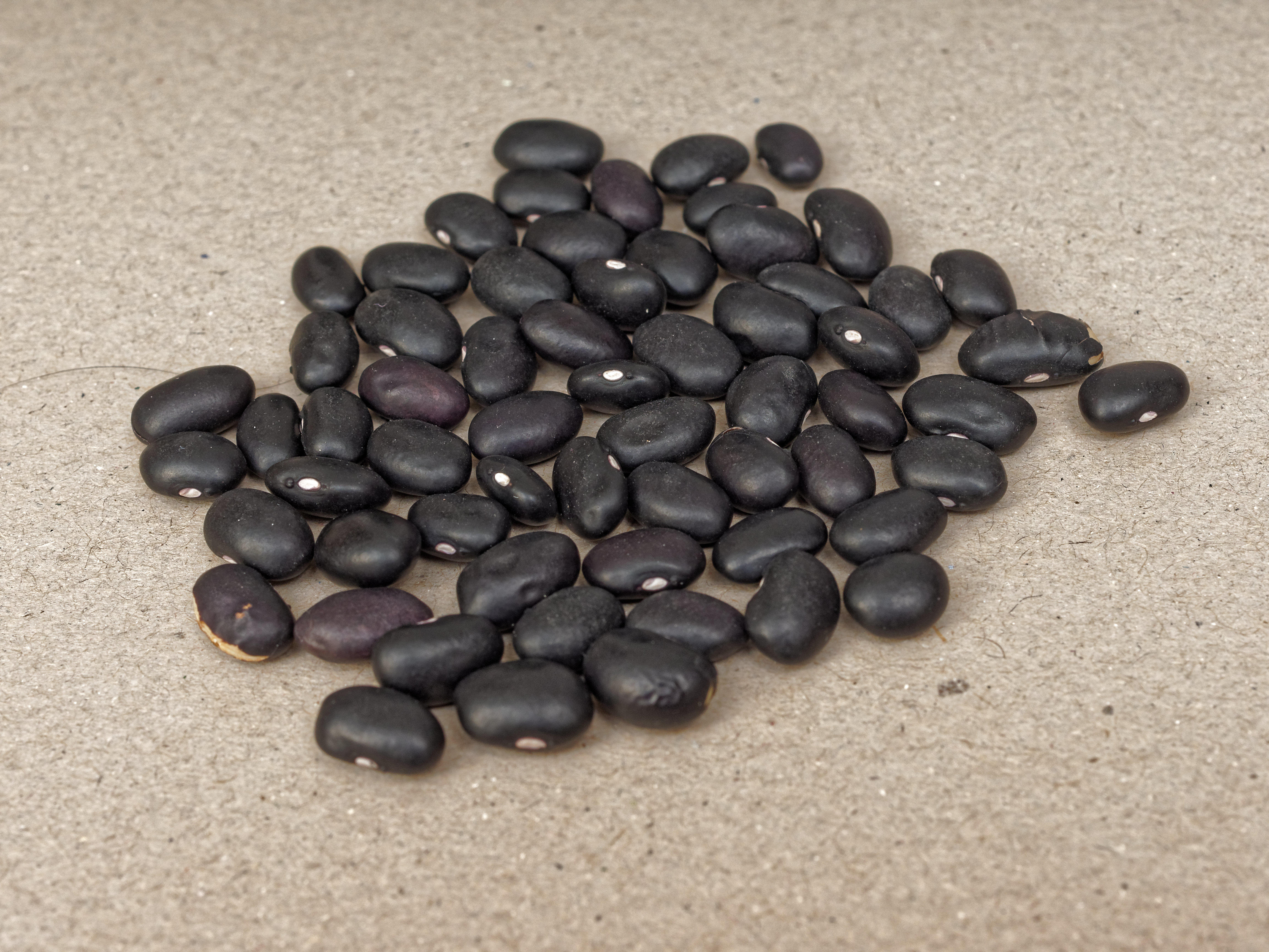 Beans-5.jpeg