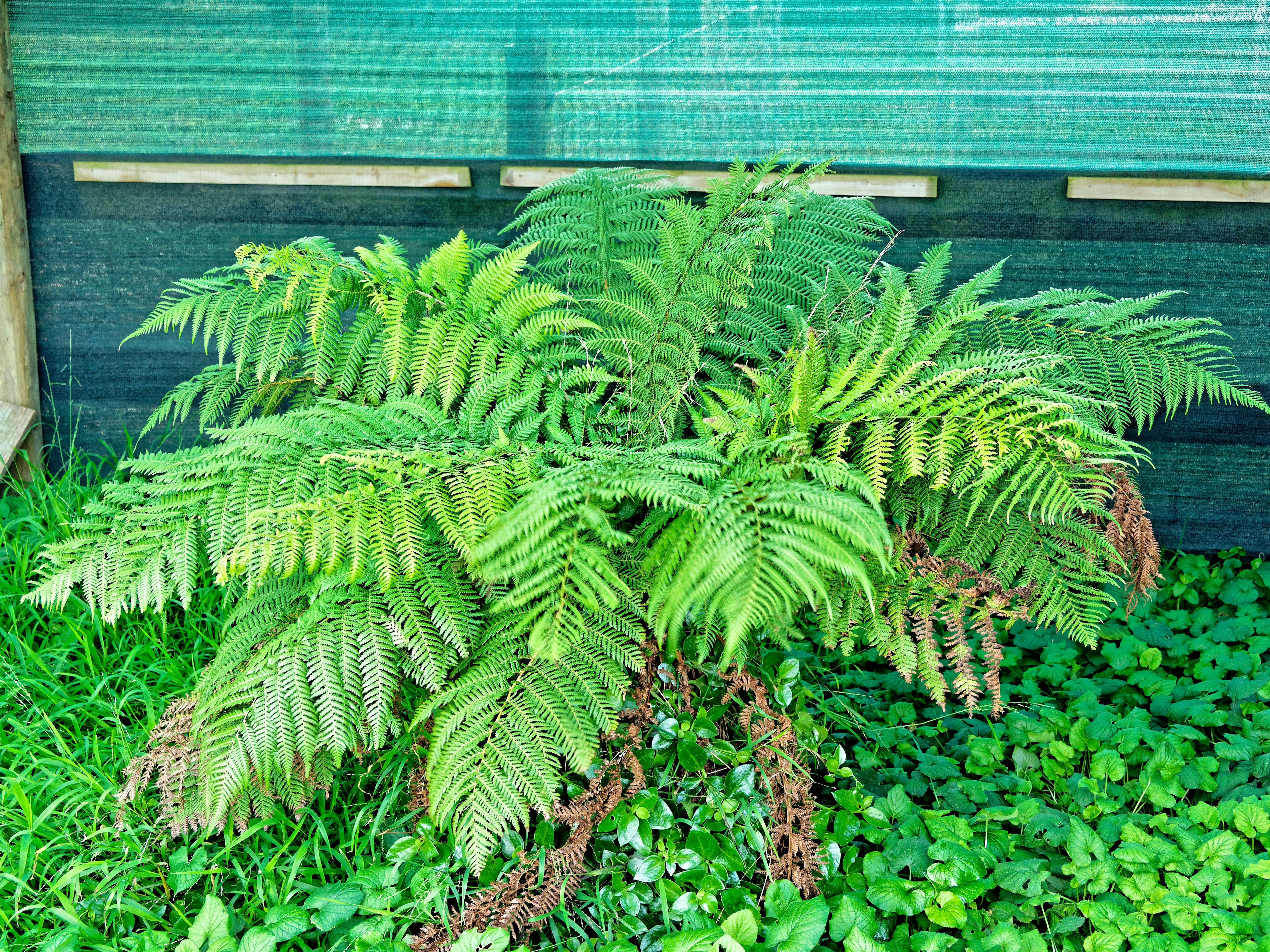 This should be Tree-fern.jpeg.  Is it missing?