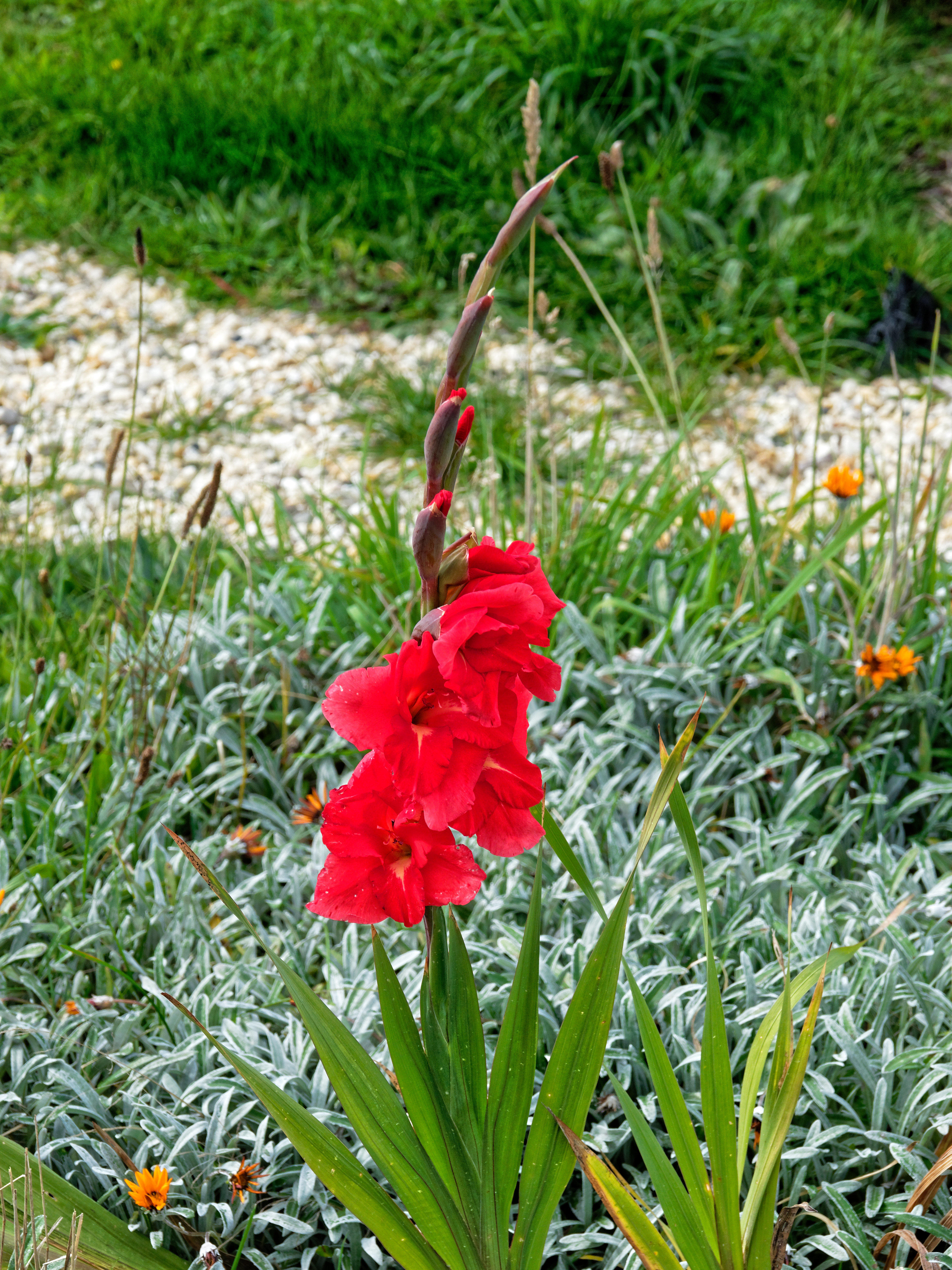 This should be Gladiolus-1.jpeg.  Is it missing?