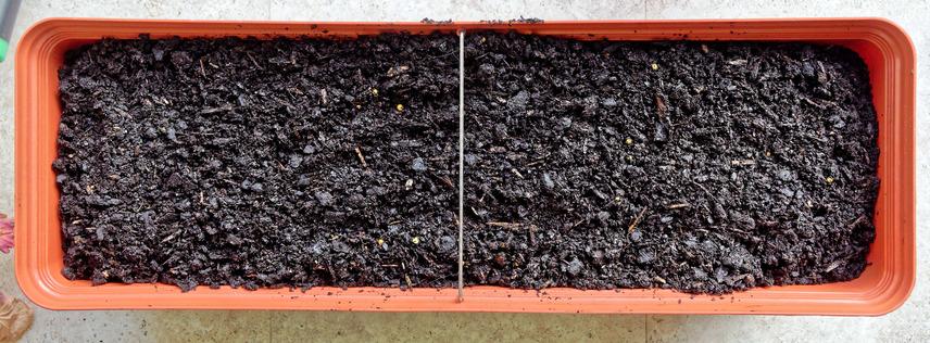 Planting-box-3.jpeg