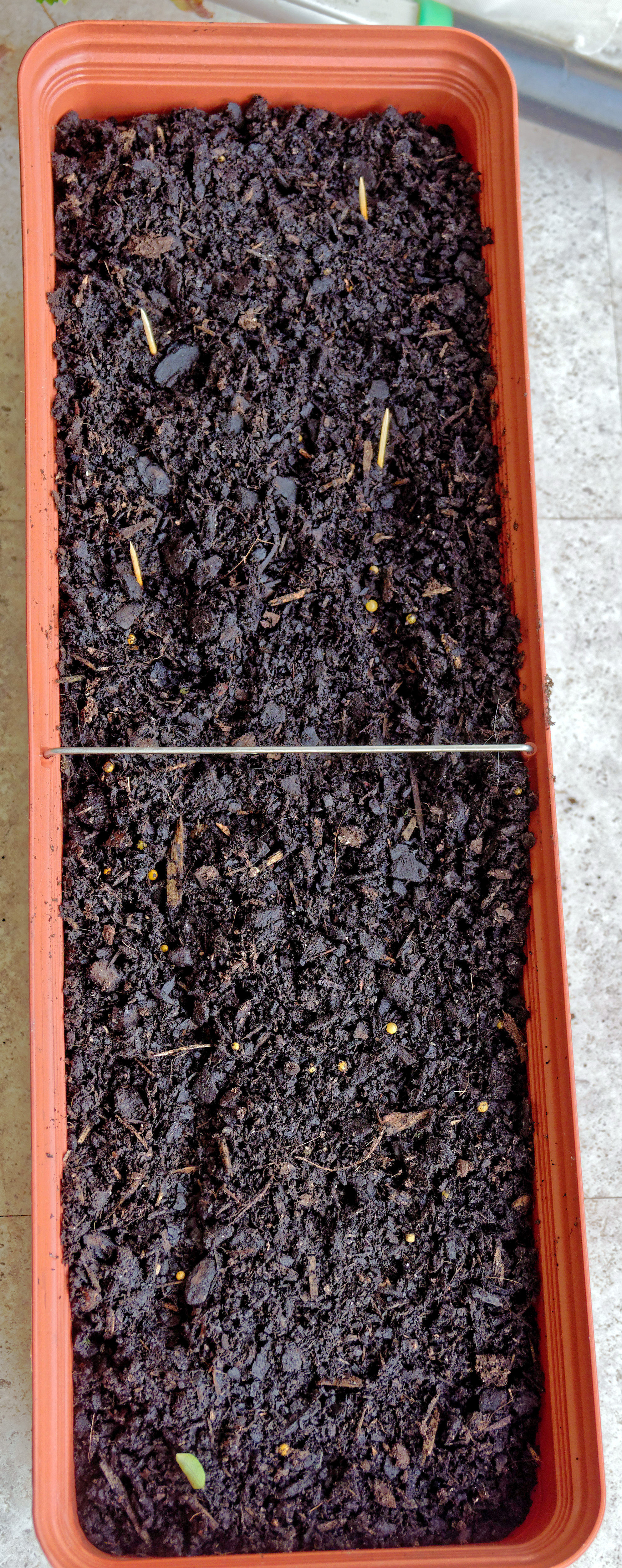 This should be Planting-basil.jpeg.  Is it missing?