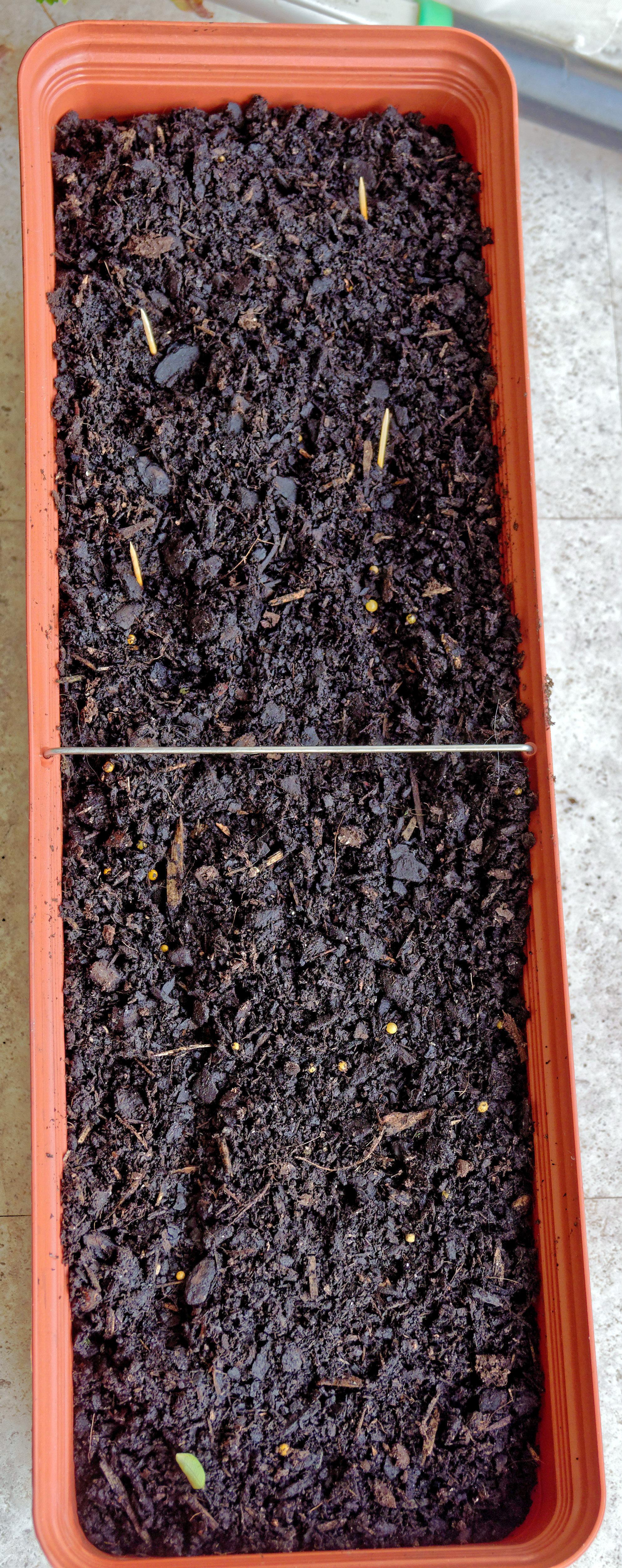 Planting-basil.jpeg