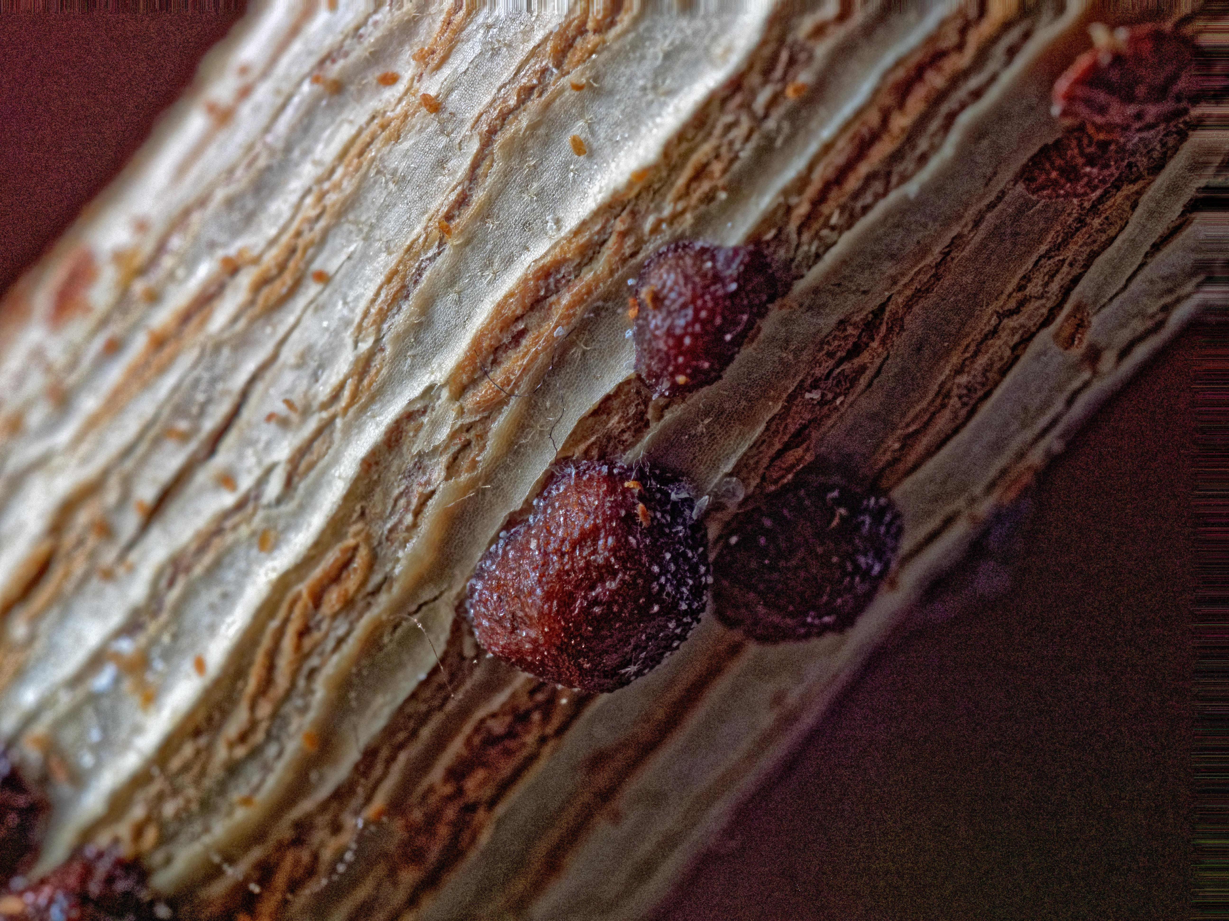 Scale-insects-4-PMax.jpeg