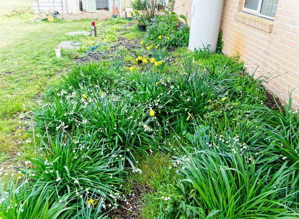 Spring-flowers-6.jpeg