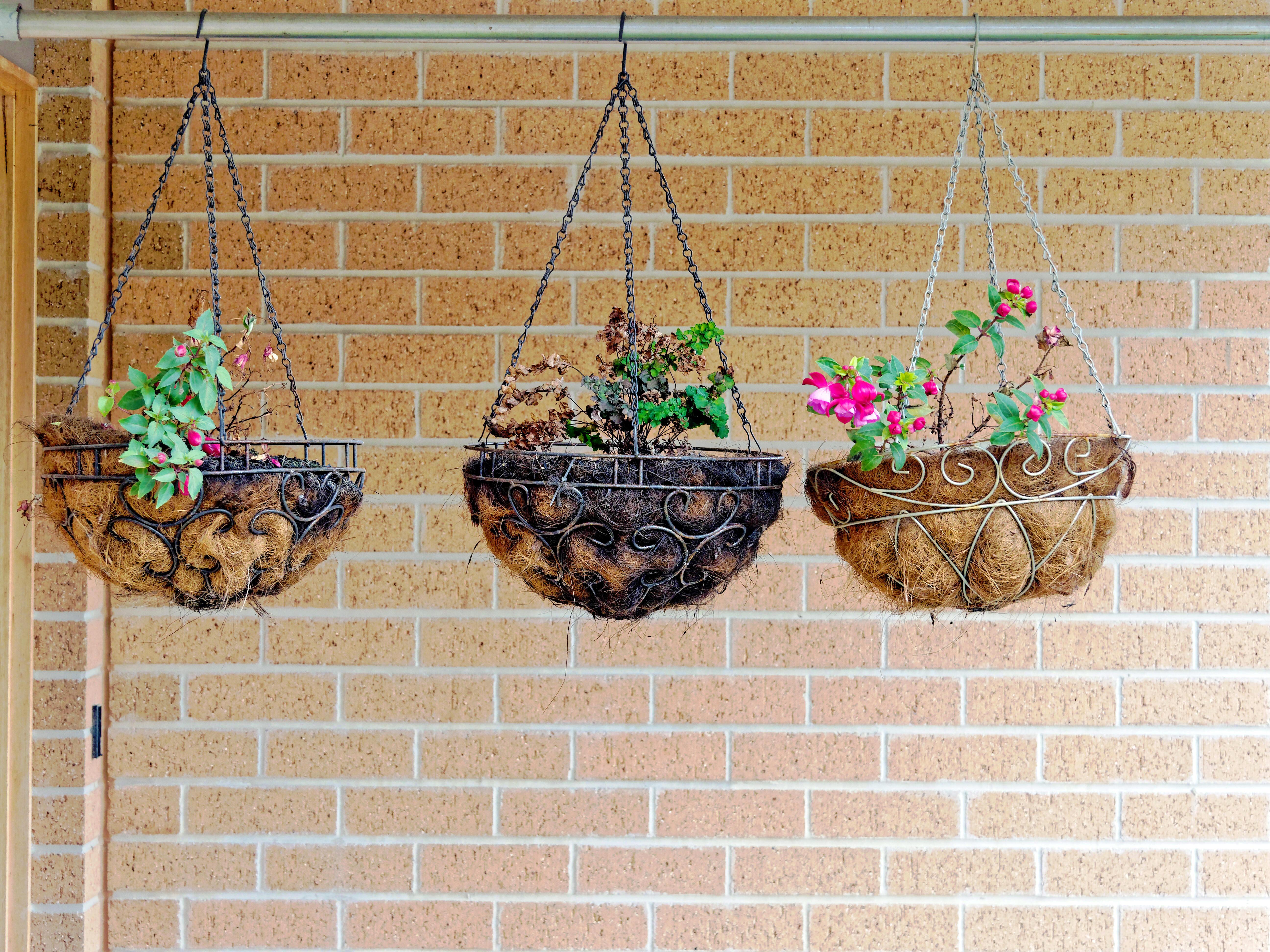 Hanging-baskets-2.jpeg