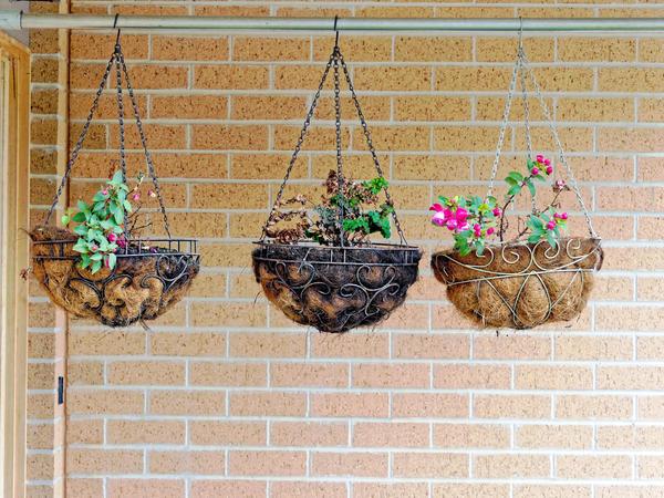 Hanging-baskets-1.jpeg