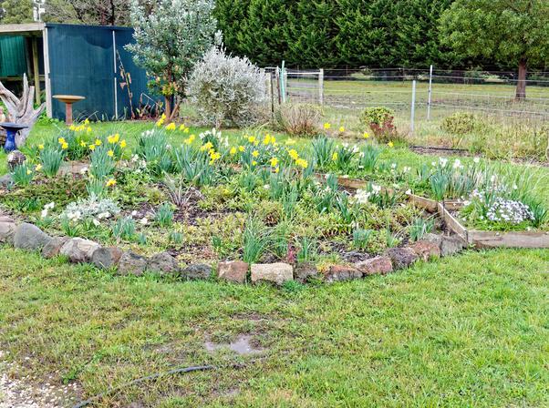 North-garden.jpeg